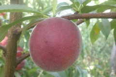 eko-jagoda-foto11