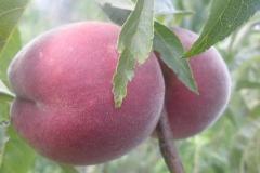 eko-jagoda-foto3